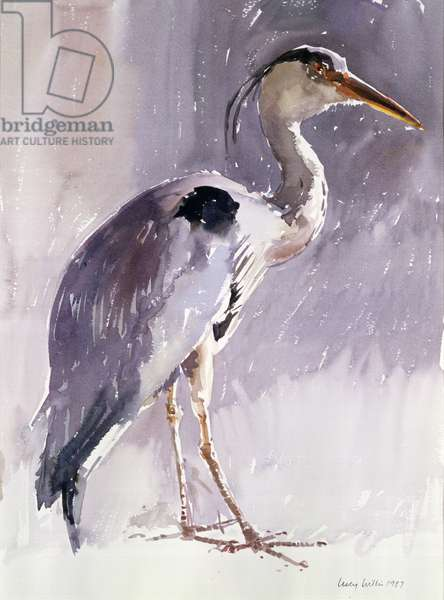 Grey Heron, 1987 (w/c on paper)