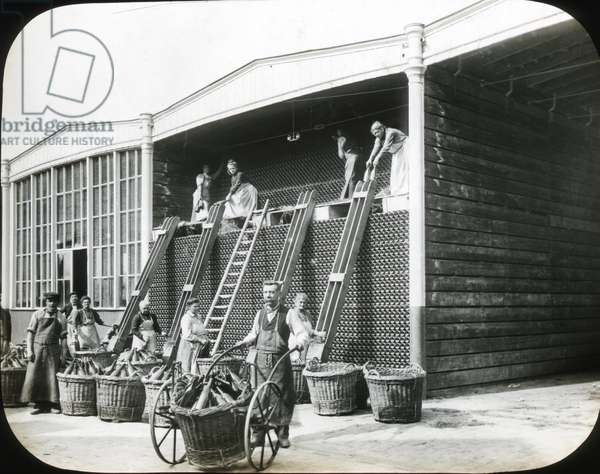 France, Champagne-Ardenne, Marne (51), Reims: Factory of manufacture of Champagne Saint Marceaux and company, putting empty bottles in a basket for printing, 1890 - photo by Rothier