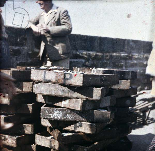 Marseille and its port: Fish seller, 1947, Marseille, France - Autochrome anonymous - Private collection