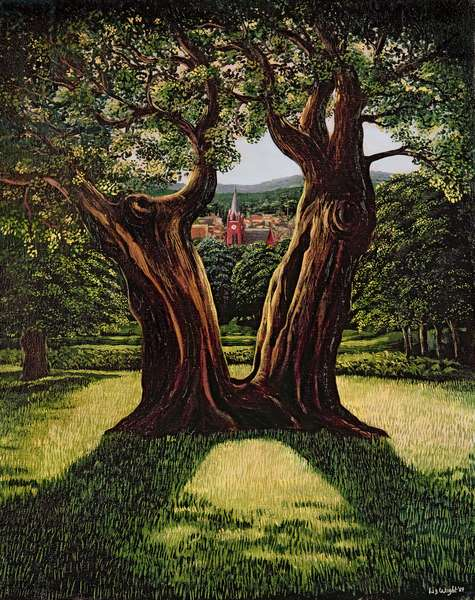 The Divided Tree, Richmond Park, 1989