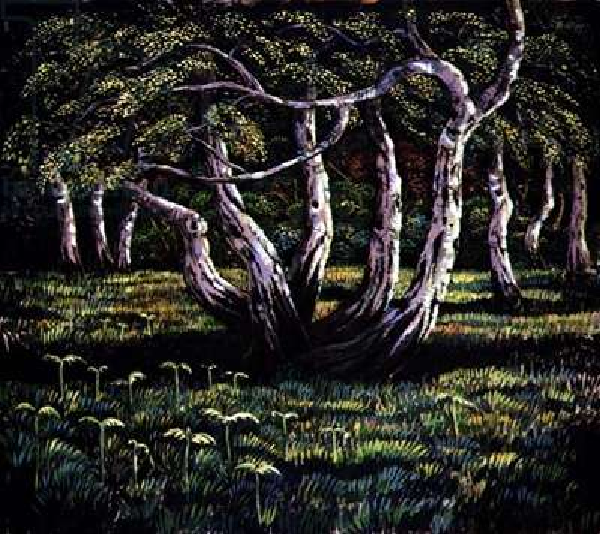 Silver Birch Trees, 1988