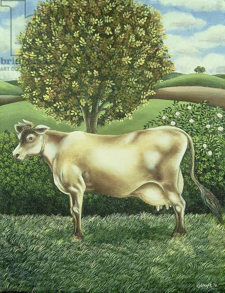 Daisy, the Jersey Cow, 1978