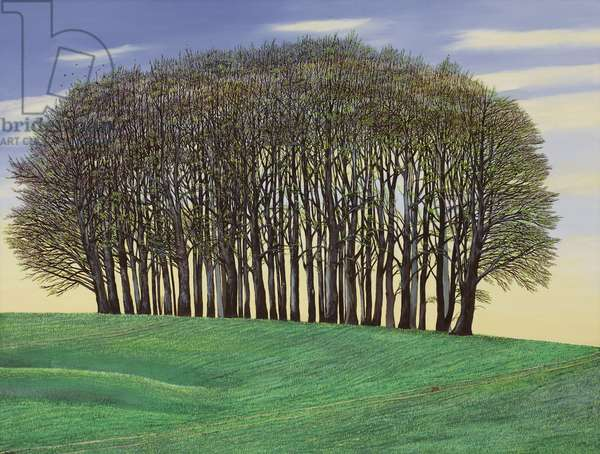 New Growth, Dorset Clump of Trees, 2015 (oil on canvas)