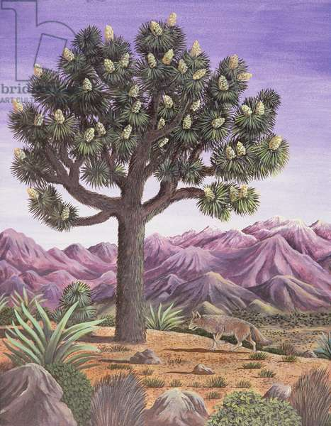 Joshua Tree and Coyote, 1983 (gouache)