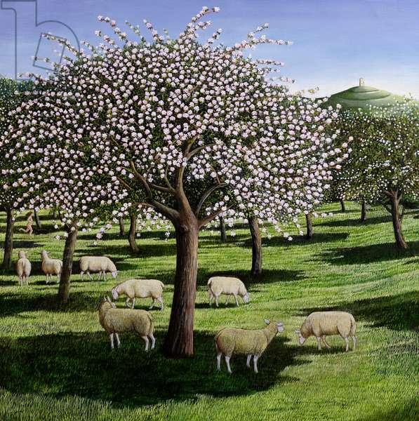 Apple Blossom, 2003 (oil on canvas)
