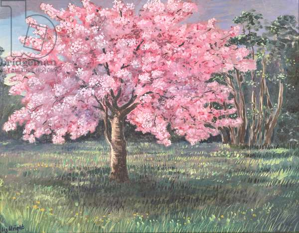 Pink Blossom, 1994 (oil on board)