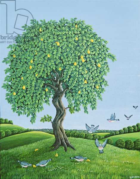 Quince Tree and Pigeons, 1983 (gouache)