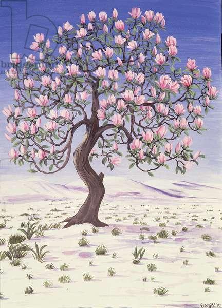 Magnolia Tree in Snow, 1983 (gouache)