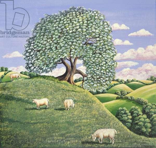 The Hawthorn Tree, 1981 (gouache)