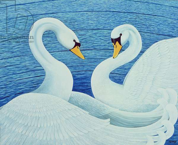 Swans, 2007 (oil on canvas)