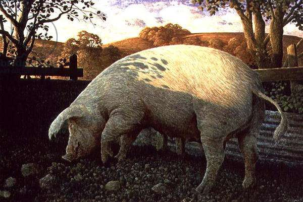 Middle White Pig, 1993 (tempera on panel)