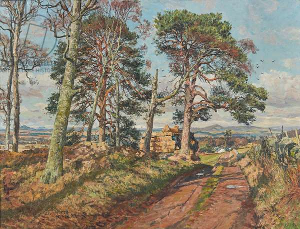Strathmore from North Ballo (oil on canvas)