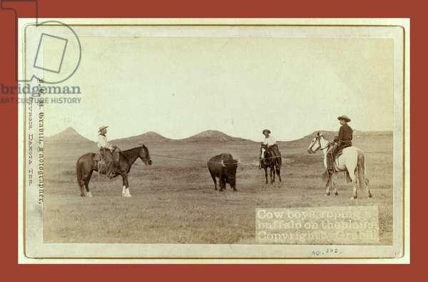 Cowboys, Roping a Buffalo on the Plains