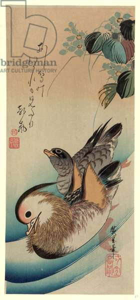 Oshidori, Mandarin Ducks. [Between 1830 and 1858, Printed Later], 1 Print : Woodcut, Color., Print Shows Two Ducks with Flowers.