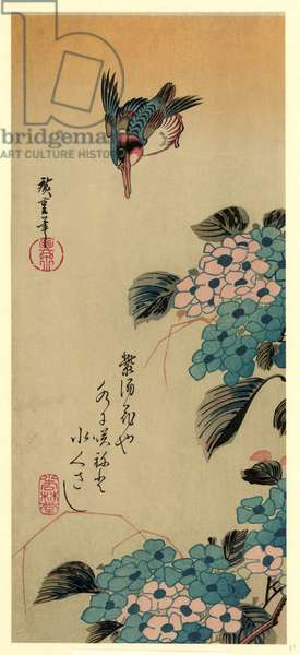 Ajisai Ni Kawasemi, Hydrangea and Kingfisher. [Between 1830 and 1858, Printed Later], 1 Print : Woodcut, Color., Print Shows a Kingfisher above Hydrangea Blossoms.