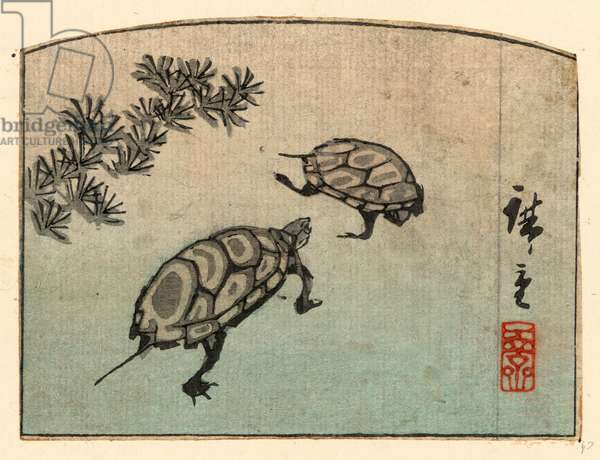 Kame, Turtles. [Between 1848 and 1858], 1 Print : Woodcut, Color ; 8.9 X 11.9 ., Print Shows Two Turtles.