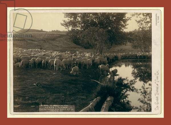 The Shepherd and Flock. On F.E. & M.V. R'Y. In Dakota