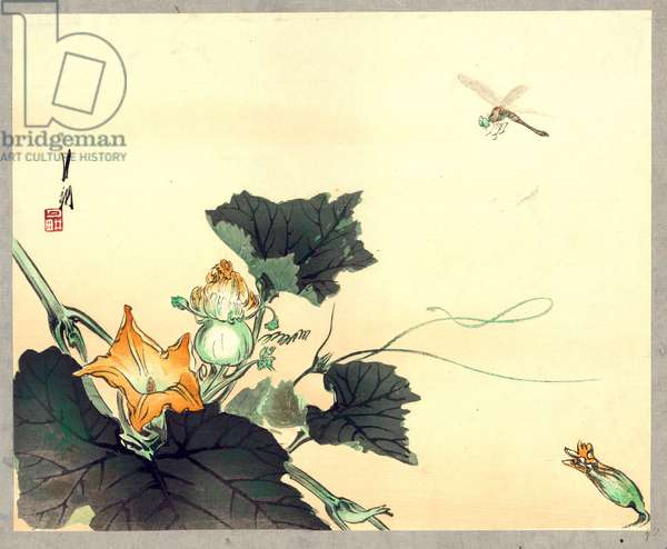 Kabocha Ni Tonbou, Dragonfly and Pumpkin. [Between 1890 and 1920], 1 Print : Woodcut, Color ; 24.7 X 30.3 ., Print Shows a Dragonfly above a Pumpkin Blossom.