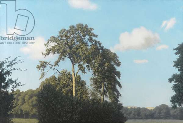 Plane trees in Hyde Park, 1948 (oil on canvas)
