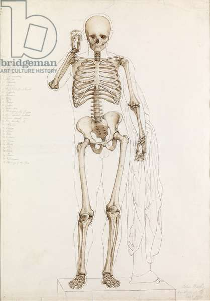 Anatomical Study: the Human Skeleton, in Contrapposto, 1870 (pencil, pen, ink & wash on paper)