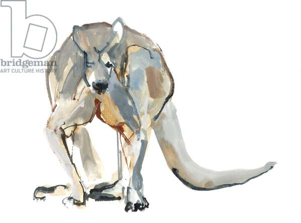Boxer (Red Kangaroo), 2012, (watercolour and pigment on paper)
