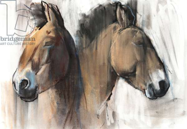 Head Study (Przewalski) 2012, (charcoal, conté and pastel on paper)