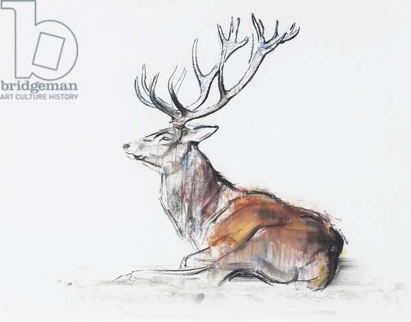 Seated Stag, 2006 (charcoal & conte on paper)
