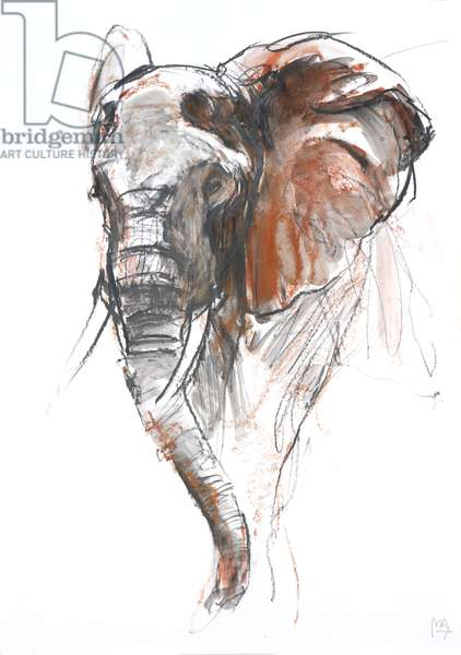 Beautiful Female Elephant, Loisaba, 2018, (graphite and conté)