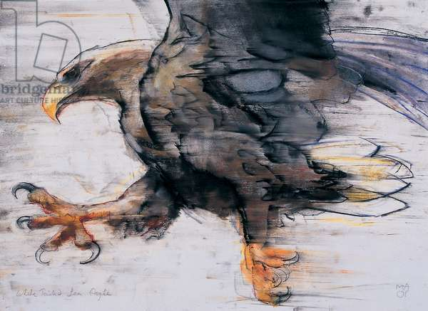 Talons - White tailed Sea Eagle, 2001 (charcoal & conte on paper)