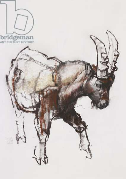Young Ibex, Gran Paradiso, 2005 (charcoal & conte on paper)