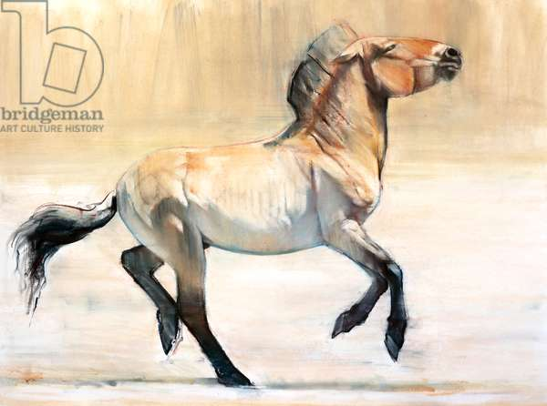 Equus (Przewalski), 2014, (pastel and charcoal on paper)
