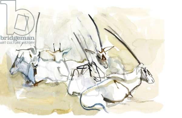 Arabian Oryx, 2010 (oil on paper)
