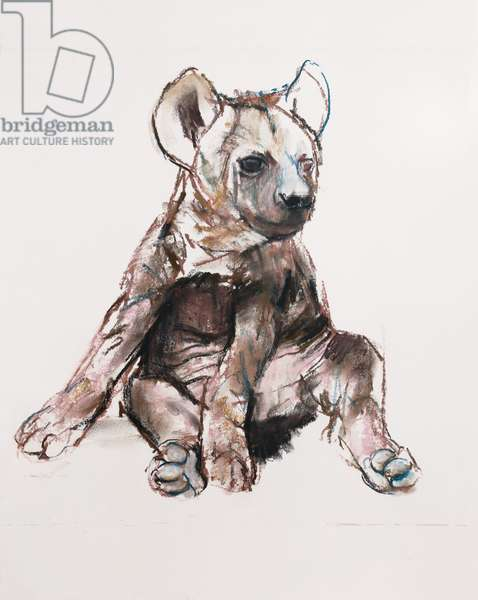 Hyaena Pup (sitting up), 2019, (conté and pastel on paper)