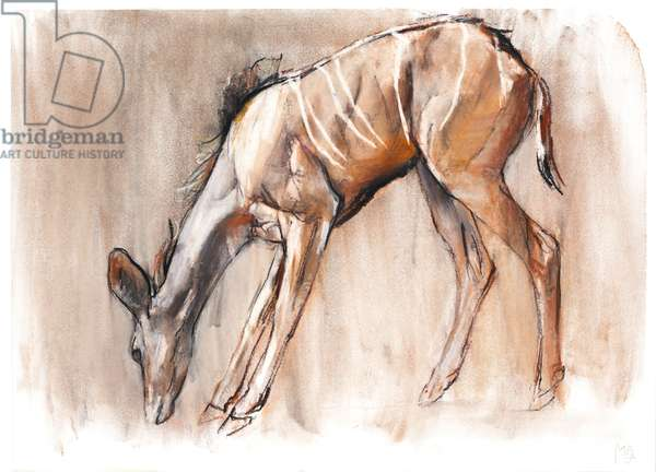 Young Kudu, Loisaba, 2018, (conté and pastel on paper)