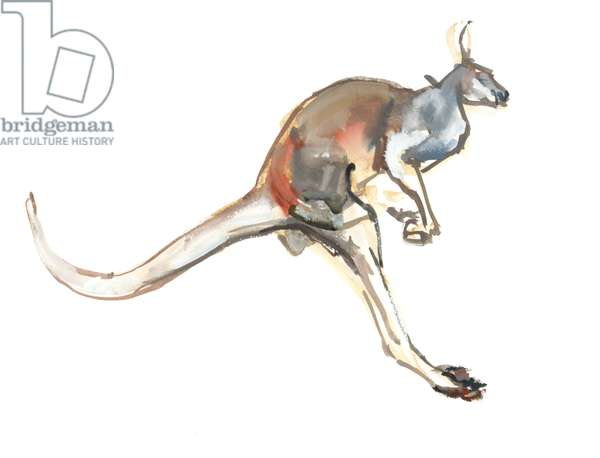 Boing, (Red Kangaroo), 2012, (watercolour and pigment on paper)