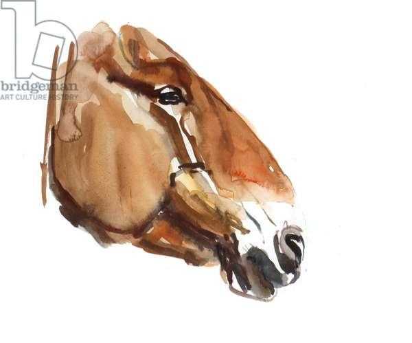 Ancient Head (Przewalski) 2012, (watercolour on paper)