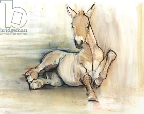 Foal, 2012, (charcoal conté and pastel on paper)