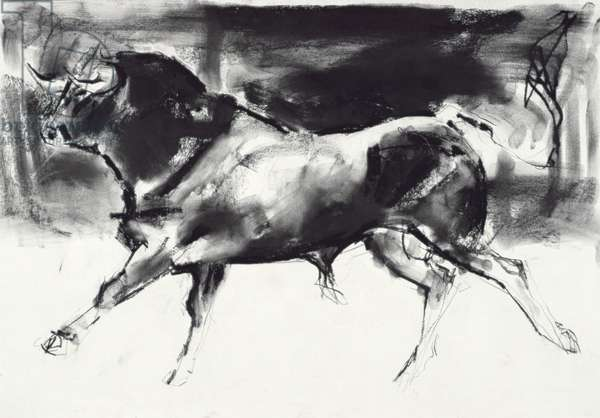 Black Bull (charcoal on paper)