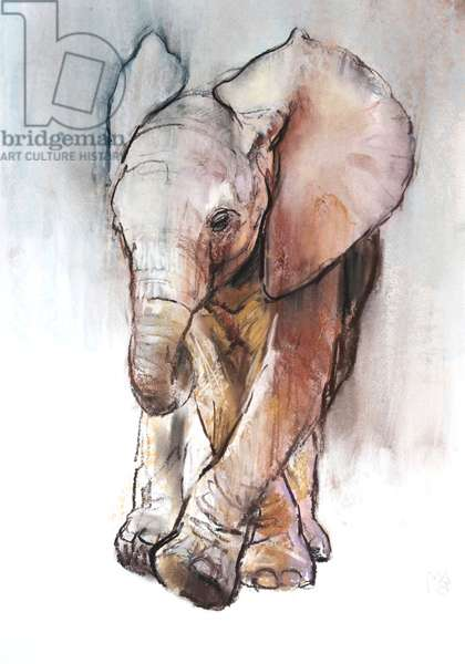 Baby Elephant 2, Loisaba, 2018, (conté and pastel on paper)