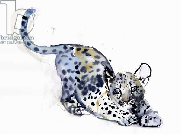 Stretching Cub (Arabian Leopard), 2008 (w/c on paper)