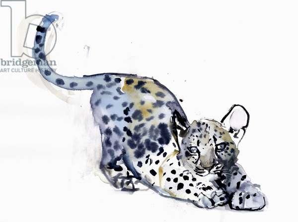 Stretching Cub (Arabian Leopard), 2008 (w/c on paper)