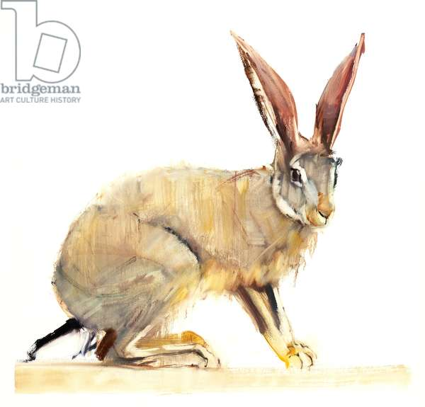 Cape Hare, 2010 (oil on paper)