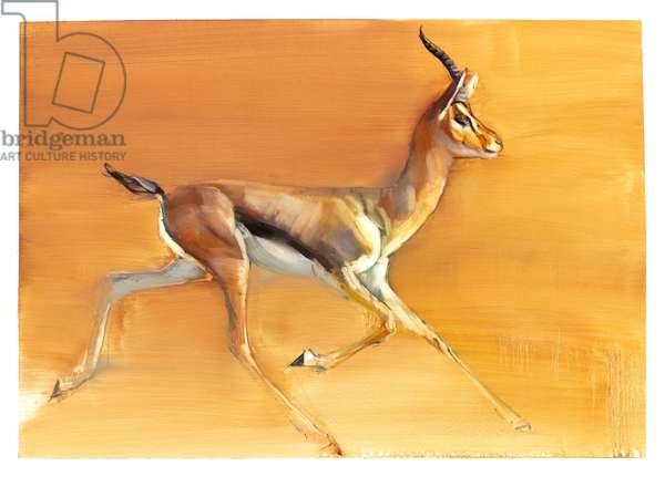 Arabian Gazelle, 2010 (oil on paper)