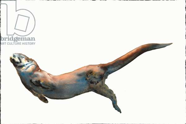 Dog Otter, 2014, (watercolour on paper)