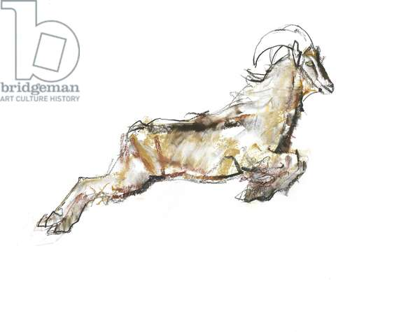Arabian Tahr, 2009 (conte & charcoal on paper)