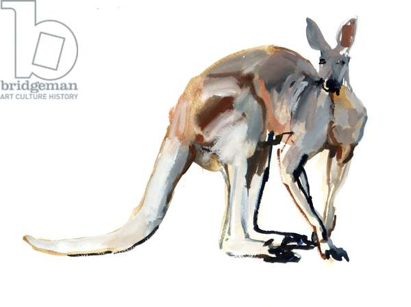 Roo, (Red Kangaroo), 2012, (watercolour and pigment on paper)