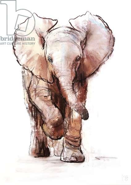 Baby Elephant, Loisaba, 2018, (pastel and conté on paper)