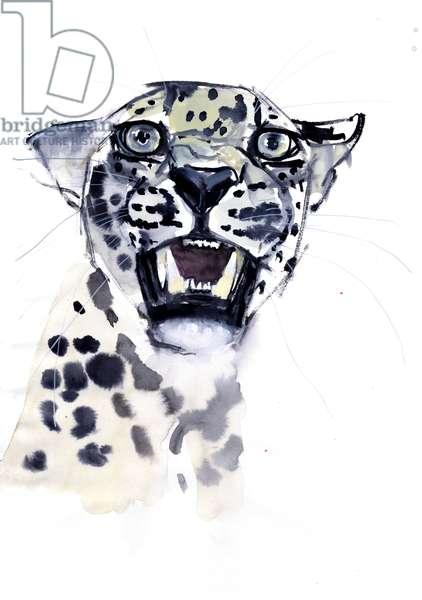 Incisor Snarl (Arabian Leopard), 2008 (w/c on paper)