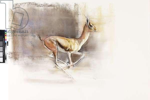 Desert Wind (Arabian Gazelle), 2010 (oil on paper)