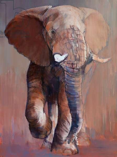 Loisaba Bull, 2018, (oil on canvas)